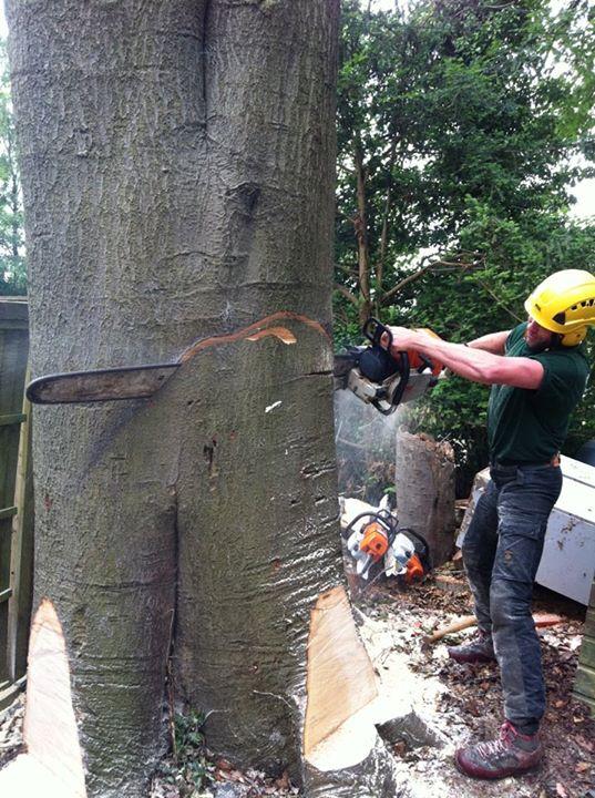 Three Pears Tree Care| Tree Felling