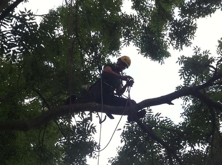 Three Pears Tree Care| Tree removal