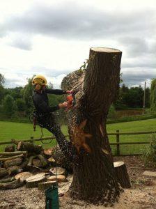 Three Pears Tree Care| Stump removal