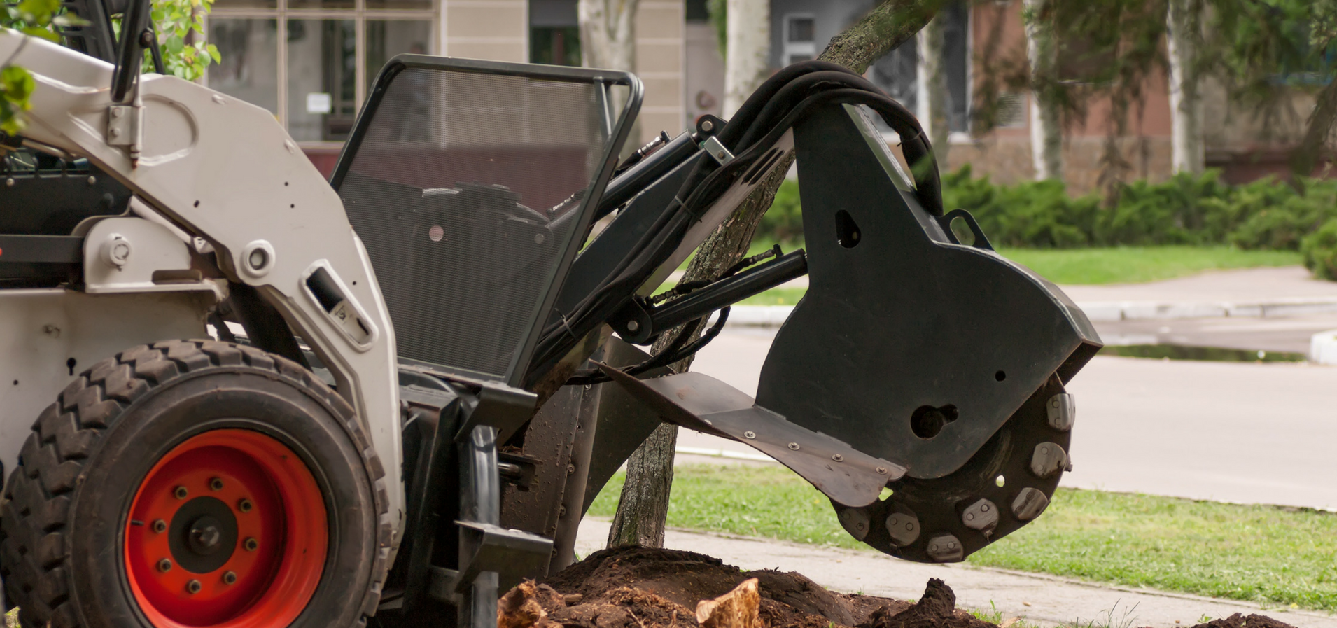 Stump grinding & Treatment