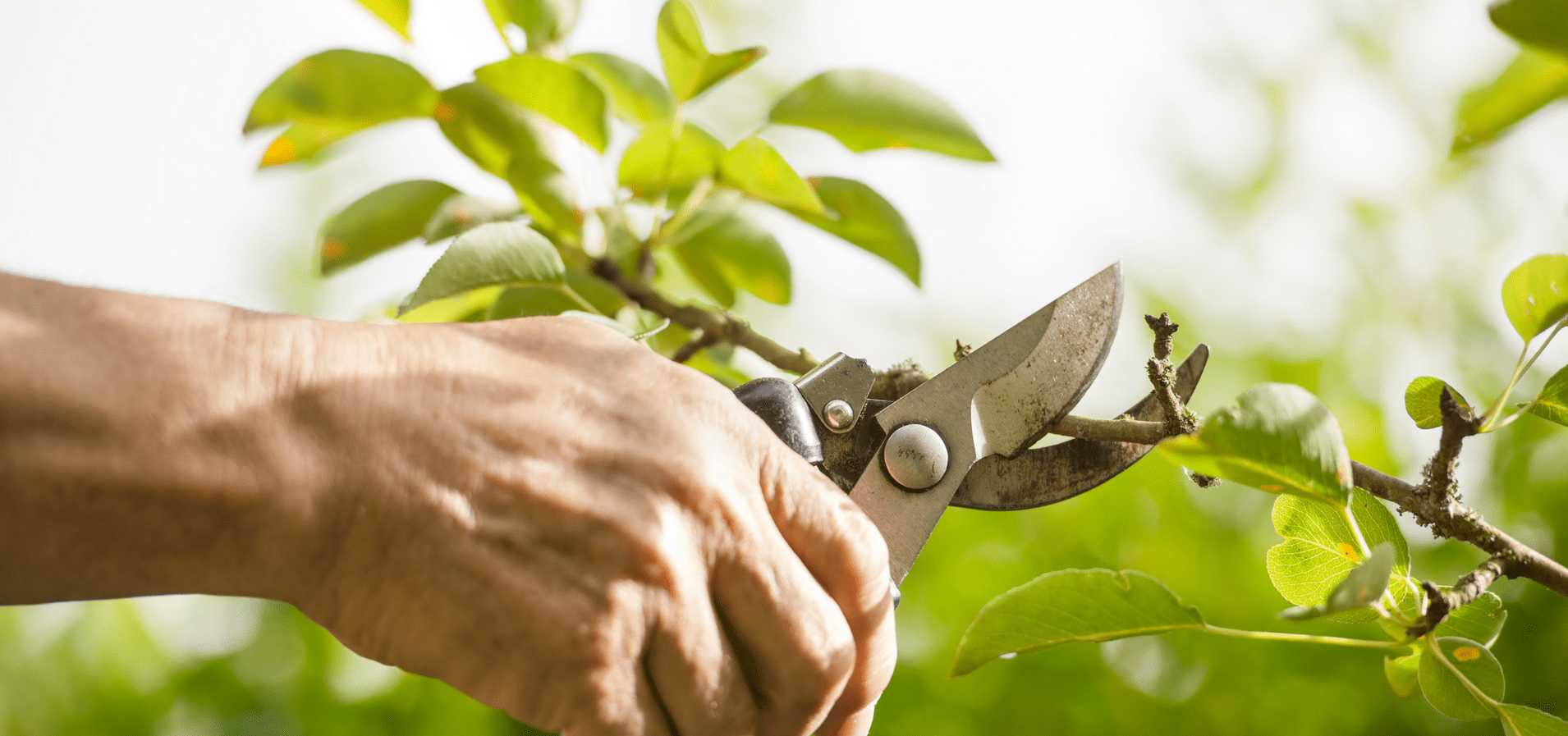 Three Pears Tree Care Pruning Services