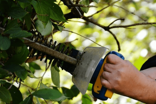 Expert Tree Surgery In Worcester