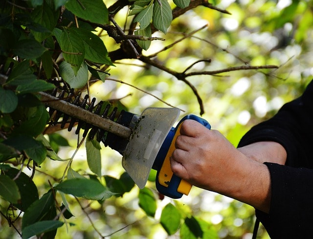 Three Pears Tree Care | Hedge Services